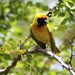 iphofolo_bird
